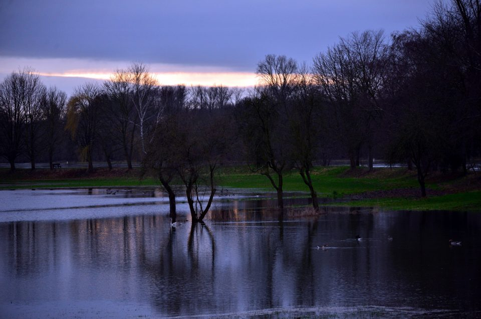 Rheinhochwasser im Sonnenaufgang