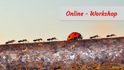 Foto-Workshop Online - Die kreative Fotozeit Booster